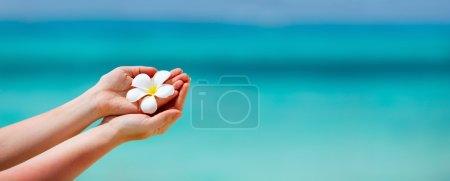 Photo pour Panorama d'une femme tenant des fleurs frangipani blanches tropicales sur de l'eau de mer tropicale turquoise - image libre de droit