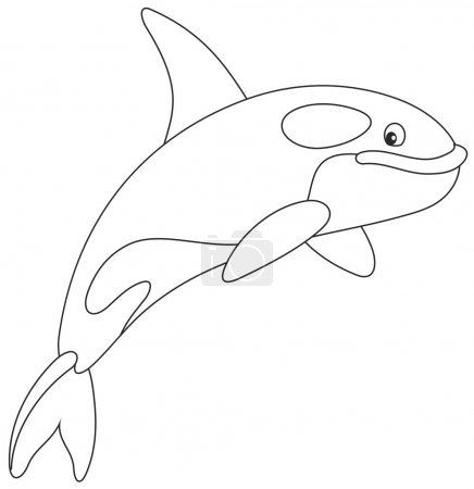 Illustration for Black and white vector illustration of an orca swimming - Royalty Free Image