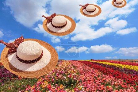 Elegant wide-brimmed hats