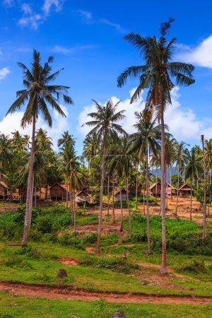 Palms growth on the island