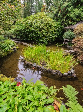 Japanese pond with lilies