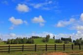 The farmer field
