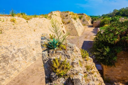 Photo for Lone bush growing on the rocks. Deep protective moat around the ancient Caesarea, Israel - Royalty Free Image