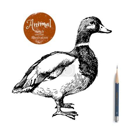 Hand drawn duck