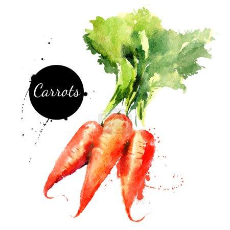 Illustration pour Des carottes. Aquarelle dessinée à la main sur fond blanc. Illustration vectorielle - image libre de droit