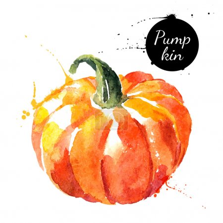 Pumpkin. Hand drawn watercolor painting on white background.