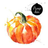 Pumpkin Hand drawn watercolor painting on white background