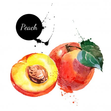 Hand drawn watercolor painting peaches