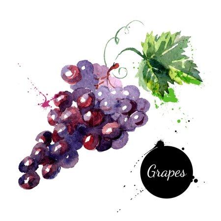 Illustration pour Aquarelle dessinée à la main sur fond blanc. Illustration vectorielle des raisins fruitiers - image libre de droit