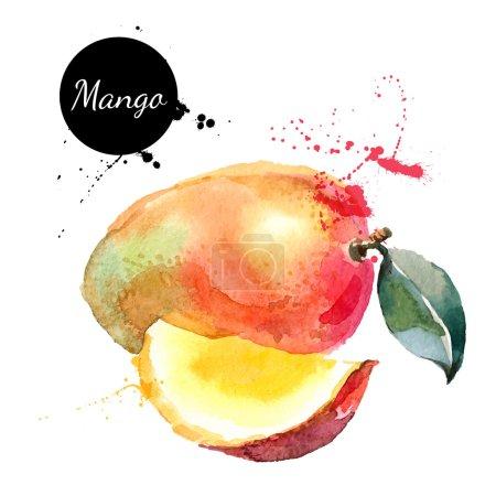 Hand drawn watercolor painting mango