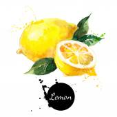 Hand drawn watercolor painting lemon