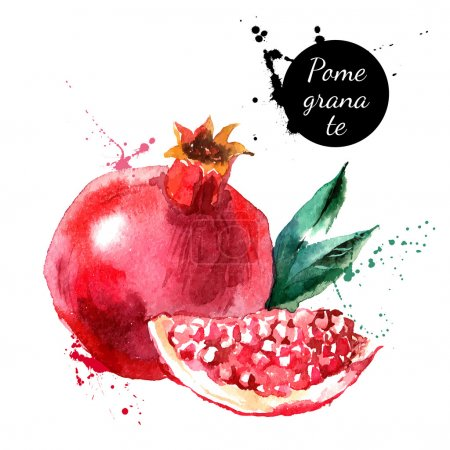 Hand drawn watercolor painting pomegranate