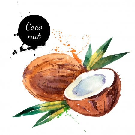Hand drawn watercolor painting fruit coconut