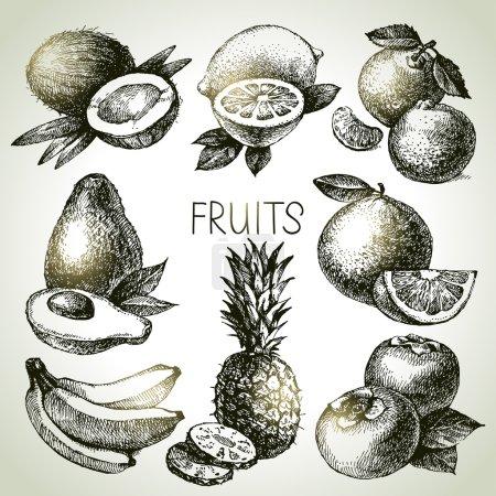 Hand drawn sketch fruits set.