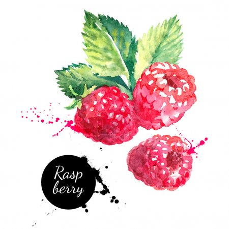 Hand drawn watercolor painting raspberries