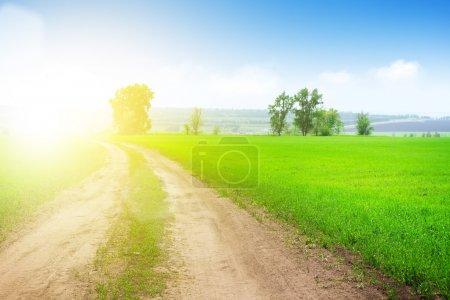 Photo pour Paysage d'été avec route de campagne à travers le champ d'herbe verte - image libre de droit