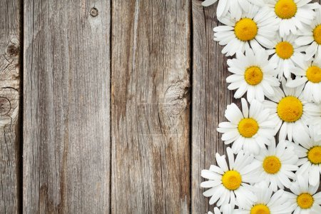 Chamomile flowers on wooden garden table