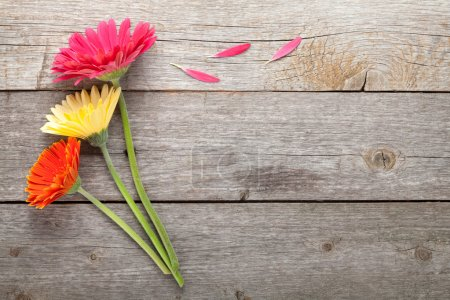 Photo for Three colorful gerbera flowers on wooden table with copy space - Royalty Free Image
