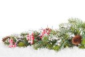 Vánoční jedle větev stromu