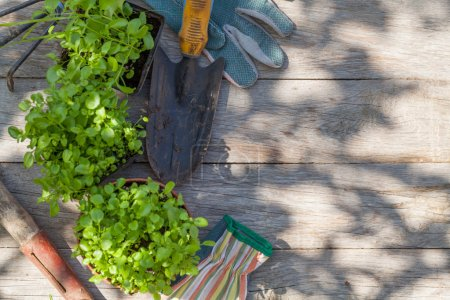 Gardening tools and seedling on garden table