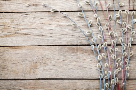 Pussy willow on rustic wooden background