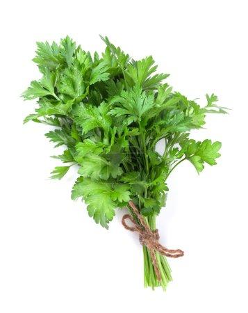 Fresh garden herbs. Parsley