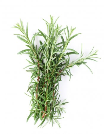 Photo for Fresh garden herbs. Rosemary. Isolated on white background - Royalty Free Image