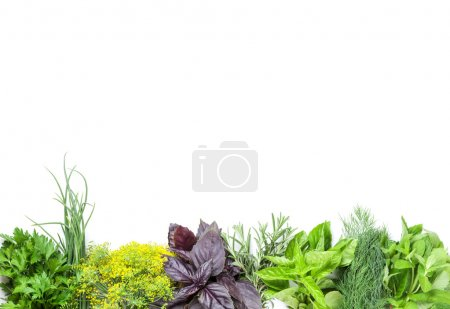Photo for Fresh garden herbs. Isolated on white background - Royalty Free Image