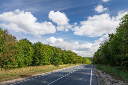 Photo pour Route goudronnée à travers la forêt - image libre de droit