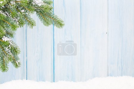 Christmas fir tree in snow