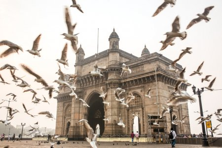 Seagulls fly in front of Gateway