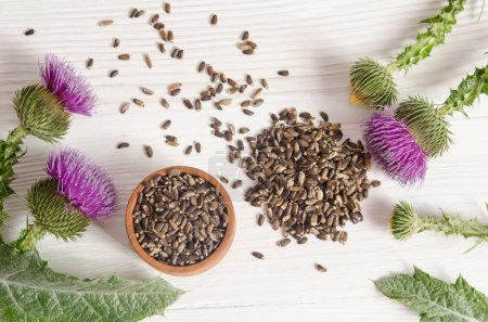 Seeds of a milk thistle with flowers (Silybum marianum, Scotch T