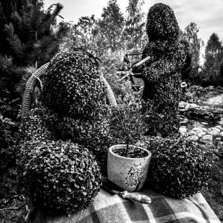 Family of live bushes. Outdoor fairy tale style black-white fine art photo.