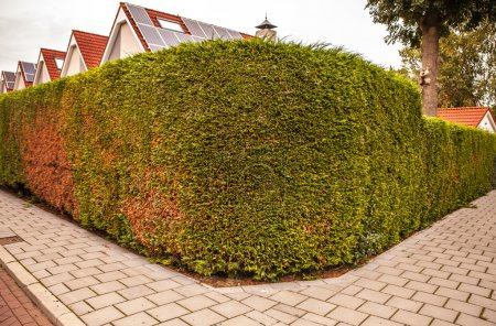 Short-cut bushes