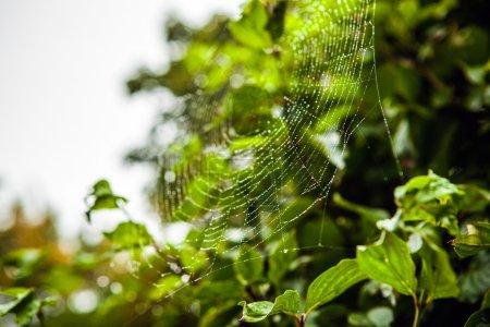 Web with dew drop