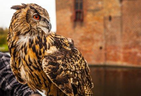 Photo pour Chouette aigle contre le château Muiderslot. Pays Bas . - image libre de droit