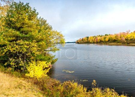 Photo pour Végétation de feuillage sur un lac en automne . - image libre de droit