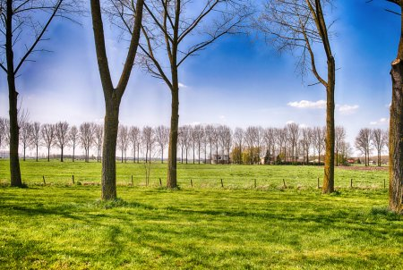Netherlands Countryside in Spring