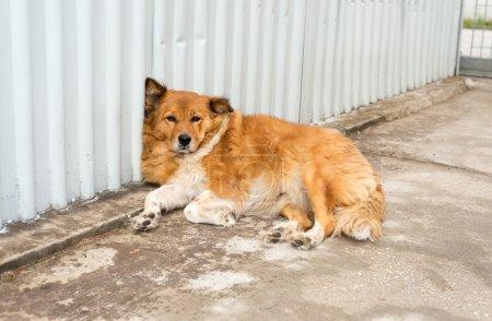 Dog relaxing outdoor