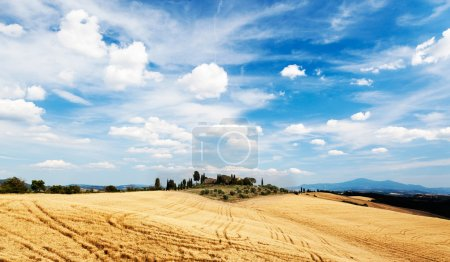 Tuscan countryside in a summer sunny day.