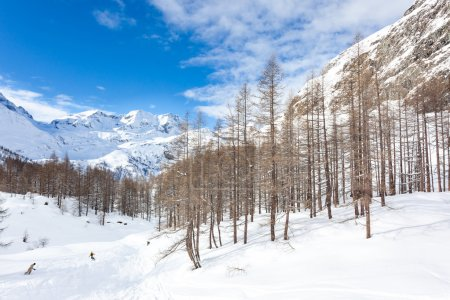 Photo pour Snowboarders skient dans une forêt de montagne enneigée. Gressoney, Val d'Aoste, Italie, Alpes d'Italie occidentale, Europe . - image libre de droit