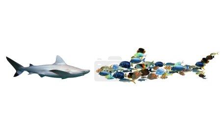Requin contre un ensemble de poissons colorés