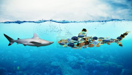 Requin contre un ensemble de poissons sous-marins