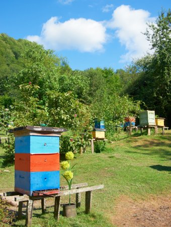 Apiary in the green hills against the blue sky