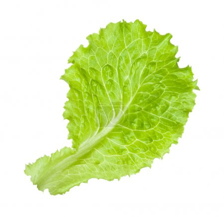 Photo for Green salad leaf isolated on the white - Royalty Free Image