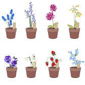 Flower pots with flowers - muscariprimrose and viola Plants growing on window sills and balcony