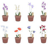 Flower pots with flowers - iris hyacinthus bluebell Plants growing on window sills and balcony