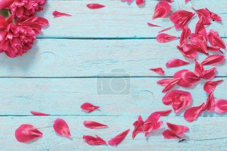 Photo pour Pivoines sur fond de bois bleu - image libre de droit
