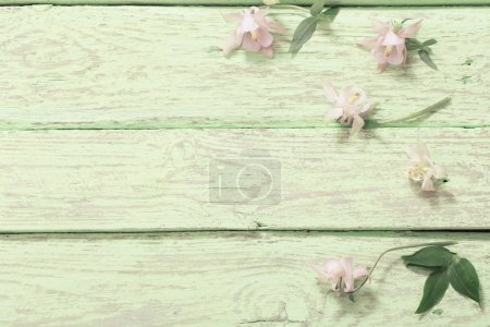 Columbine Flowers on Green Wooden  Background