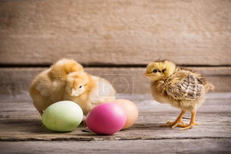 chicken with Easter eggs on wooden background